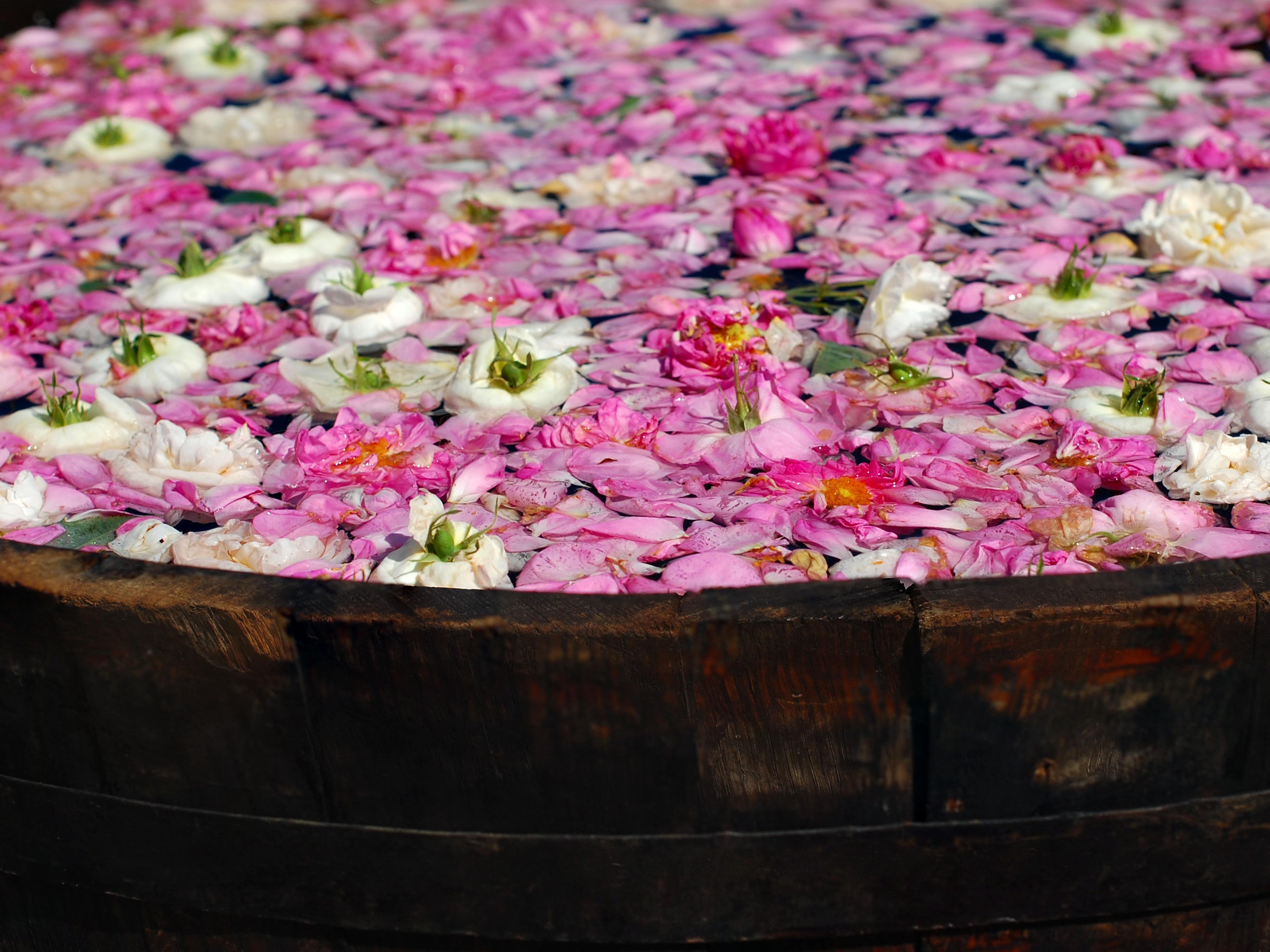 Bulgaria, la festa delle Rose